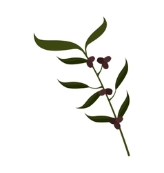 Olive fruit plant stem icon vector