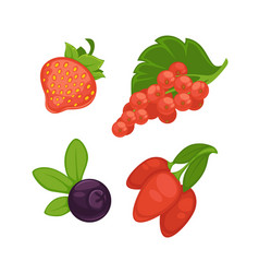 set of different berries vector image