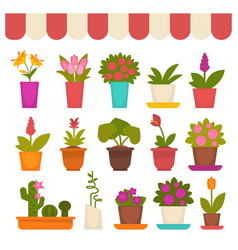 Different flowers in shop vector