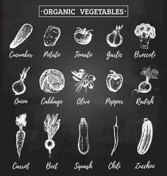 farm vegetables sketches set organic vector image