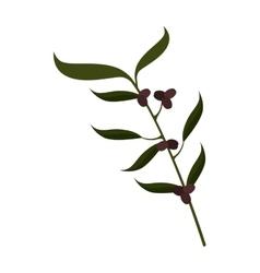 Olive fruit plant stem icon vector