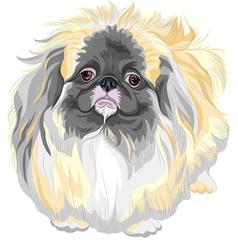 pedigreed dog Sable Pekingese breed vector image vector image