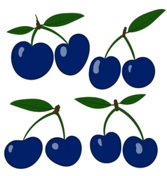 plums Collection blue plum fruits vector image