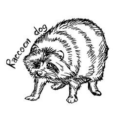 raccoon dog vector image