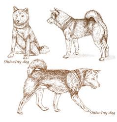 Shiba iny dog vector