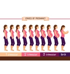 Pregnancy stages flat pregnant woman and birth vector