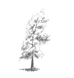 hand-drawn tree poplar realistic image in shades vector image