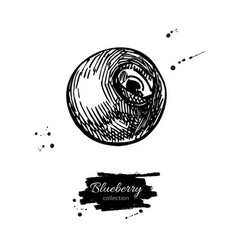 Blueberry drawing isolated hand drawn vector