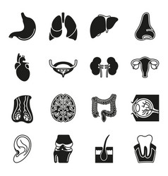internal human organs icons set vector image vector image