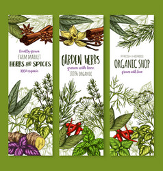 banners sketch spices and herbs seasonings vector image vector image