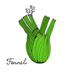 colorful hand drawn card with fennel vector image vector image