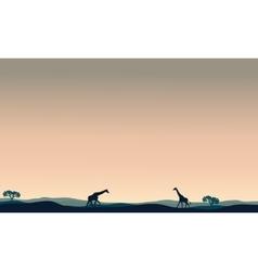 Landscape giraffe at afternoon vector