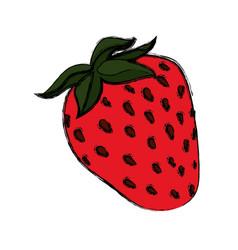 Strawberry delicious fruit vector