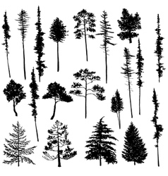 Set of conifer trees vector