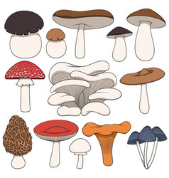 set of color images of mushrooms vector image vector image