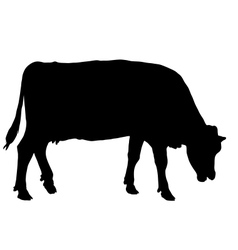 Grazing cow vector