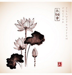 lotus flowers hand drawn with ink vector image vector image