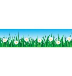 Seamless grass with daisies vector