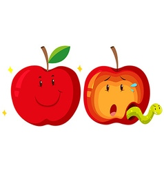 Fresh apple and rotten apple vector