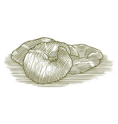 woodcut croissant vector image