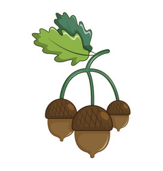 Acorns with leaves icon cartoon style vector