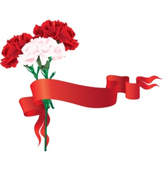 red and white carnations with a ribbon vector image