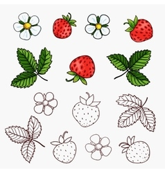 Beautiful strawberries composition vector