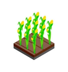 Growing tulips isometric 3d icon vector