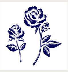 engraving roses on grey background vector image