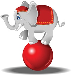 Elephant at the circus vector