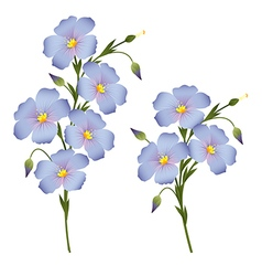 Twigs with flowers of flax vector image