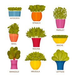 Indoor gardening icons with lettuce vector