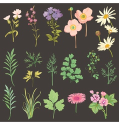 Set of flowers and herbs - hand drawn watercolor vector