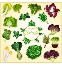 Salad leaf and vegetable greens poster vector image