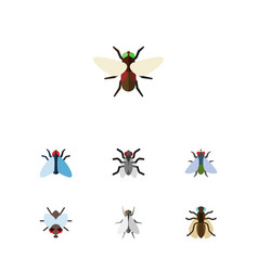 Icon flat fly set of bluebottle buzz mosquito vector