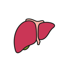 liver icon on white background vector image vector image