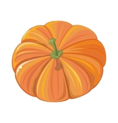 Pumpkin isolated cultivar of squash round plant vector