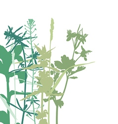 Herbal background vector