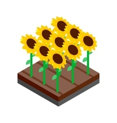 Sunflower field isometric 3d icon vector