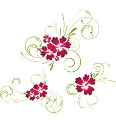 Hibiscus floral elements vector