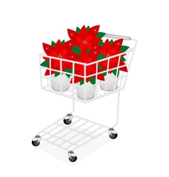 Beautiful poinsettia flower in a shopping cart vector