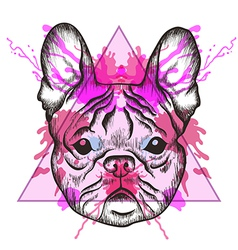 Sketch hipster french bulldog face in triangle vector