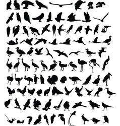 100 birds vector image