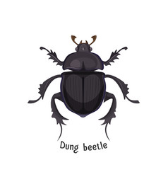 Black dung beetle that has strong unpleasant smell vector
