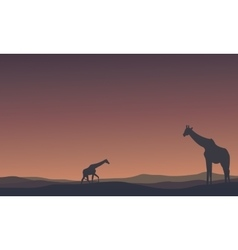 Landscape giraffe at morning silhouettes vector