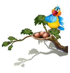A parrot watching the eggs in the nest vector image