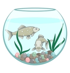 Two green fishes in the round aquarium vector