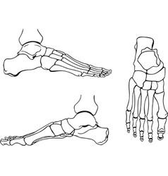 Foot bones vector
