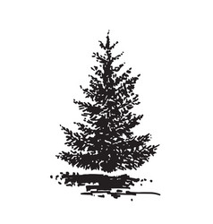 hand-drawn tree fir black and white realistic vector image