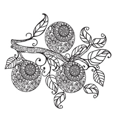 Orange and leaves hand drawn in black and white vector
